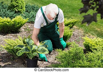 Caring about garden - Senior gardener is trying to plant...