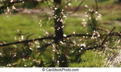 water springler