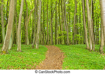 Coastal forest on the island Ruegen Germany