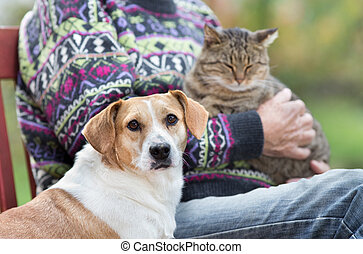 Senior man with pets - Close up of cute dog standing on...