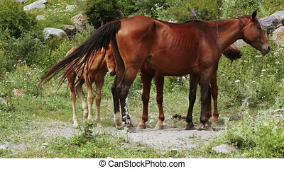 Family of horses on nature - Nature walk freely and protect...