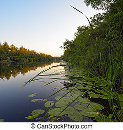 River in the evening - River with yellow lilies in the...