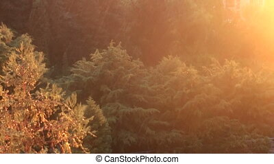 rain in the forest on the background of sun rays. Full HD....