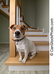 dog on wooden staircase closeup