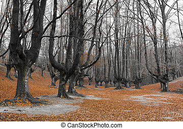 Forest of Otzarreta, Alava, Basque Country, Spain