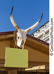 Skull of cattle with horns
