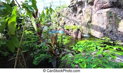 tropical garden - Trekking in the tropical garden