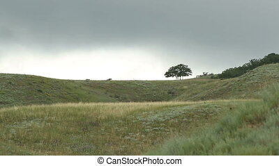 tree on a hill on a background sky - tree on a hill on a...