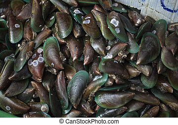 Mussels - Fresh seafood sold in the market