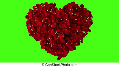 red heart of rose petals flying with vortex on chroma key, green screen background, love and valentine day concept