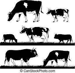 grazing cows and bulls - vector silhouettes of the cattle in...