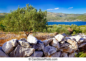 Olive plantage by the sea in Marina bay, Dalmatia, Croatia