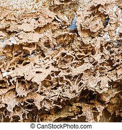 papel, comido, por, termita,