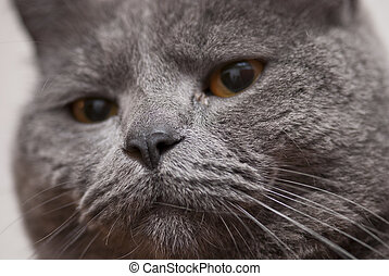 Cat Expression, Italy - Cat on a very expressive behaviour,...