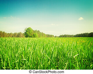 Sumer filed with green grass - Sumer filed with long green...