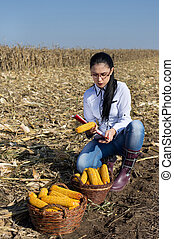 Woman agronomist in corn field - Young woman agronomist...
