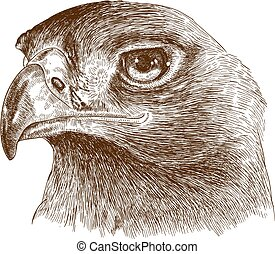 eagle head - Vector antique engraving illustration of eagle...