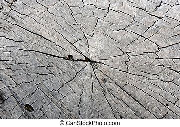 stump texture old age