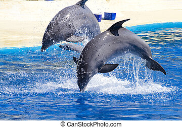 dolphin jump out of the water in pool - dolphin jump out of...