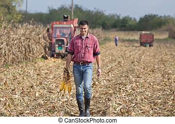 Farmer on corn field - Young farmer walking on field during...