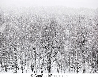 strong snowing over woods in winter day