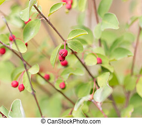 red berries on a bush in nature
