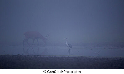 Heron and deer in the fog - Foggy landscape with White heron...