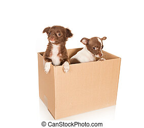 Dog relocation - Two puppy chihuahua dogs in a brown box to...