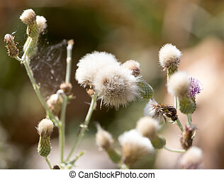 flowers on a prickly plant