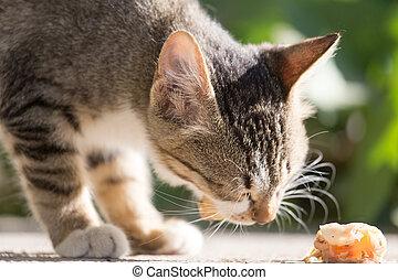 kitten eats