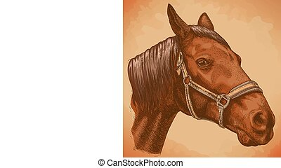 hand drawn horse head - Vector engraving illustration of...