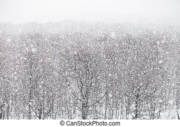 snowfall over forest in winter day - strong snowfall over...