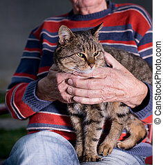 Cat in old mans lap - Cute tabby cat sitting in old mans lap...