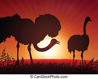 ostrich on sunset background
