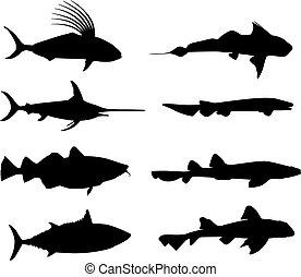 grande, pez, marina, vida, Siluetas