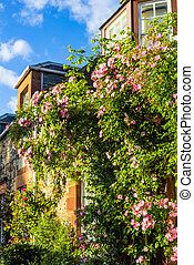 A house with pink climbing roses