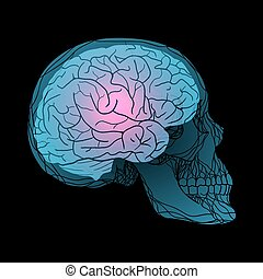 X-rays of the human skull with the brain. Vector...