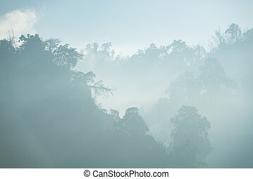 the morning forest with mist