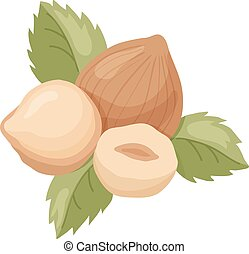 hazelnut - vector illustration of hazelnut with leaves on...