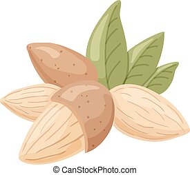 almond - vector illustration of almond nuts with leaves on...