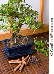 Herbs and bonsai