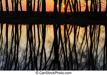 Perfect reflection of trees in water at sunset