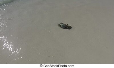 crab splashing in sea water on beach - travel, tourism,...