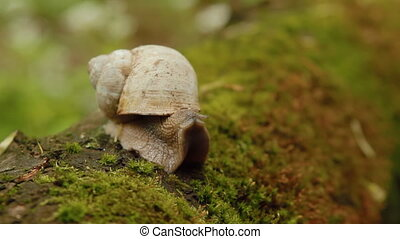 Snail opening eyes in forest - Beautiful snail opening eyes...