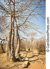 Hiking in Africa along a dry and hot hiking trail in...
