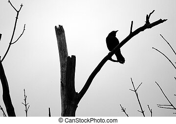 Spooky Blackbird - Silhouette of a blackbird perched among...