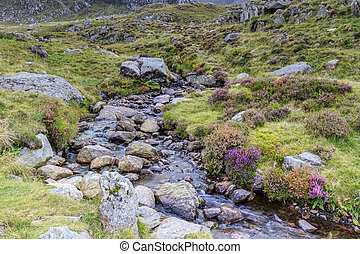 Snowdonia national park - A stream in Snowdonia national...