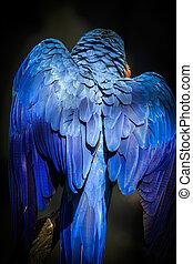 Blue-and-yellow macaw - Blue and yellow macaw perched on a...
