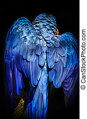 Blue-and-yellow macaw - Blue and yellow macaw perched on a...