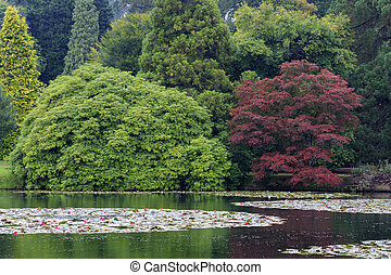 Botanical garden - Beautiful pond in a Botanical garden